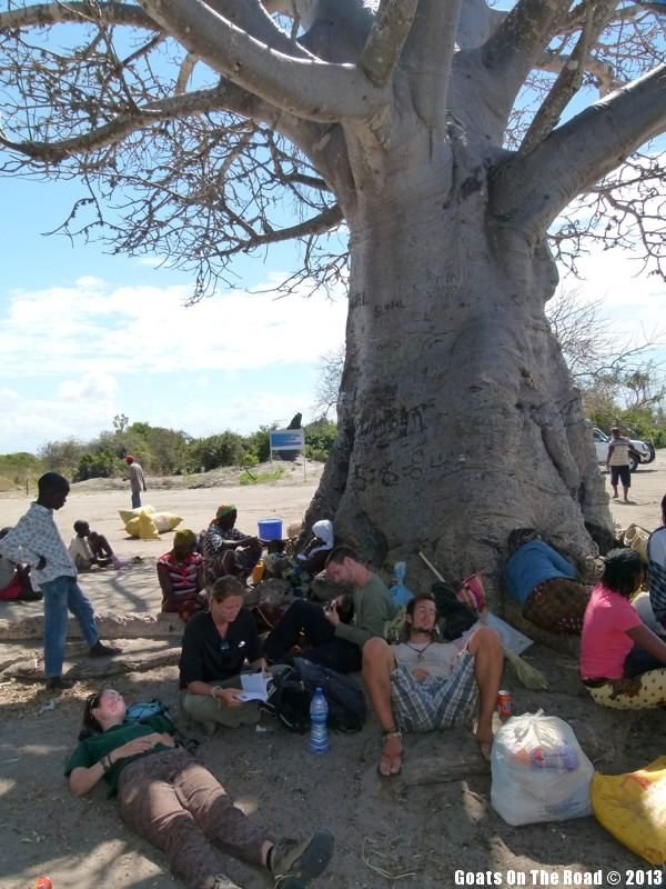 people laying at the base of a large tree in Mozambique